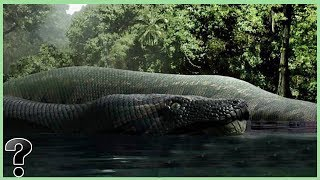 What If The Titanoboa Snake Didn