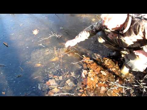 Snapping Turtles Under Ice