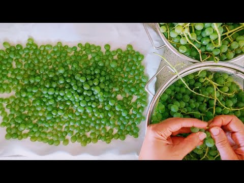 Preserving the Harvest || Grapes