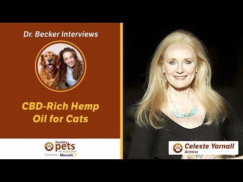 Dr. Becker Interviews Dr. Yarnall About CBD-Rich Hemp Oil for Cats
