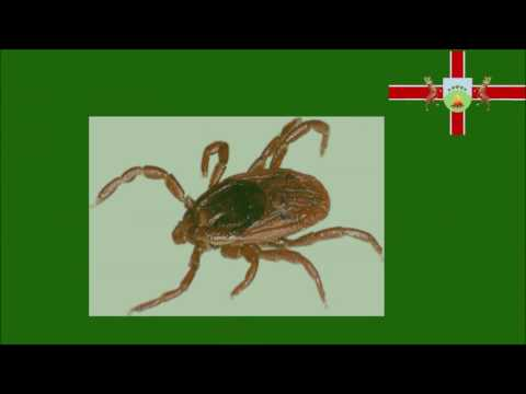 Ticks. Everthing you need to know about ticks, bites and Lyme Disease.