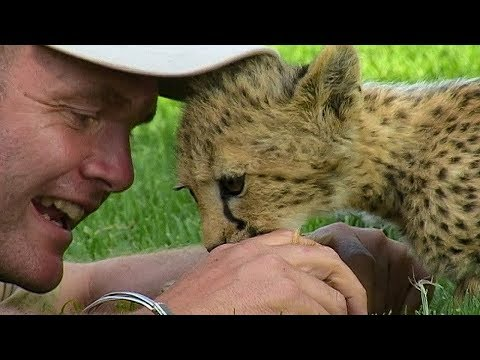 How young Cheetah cubs use play to learn to hunt | BBC Earth