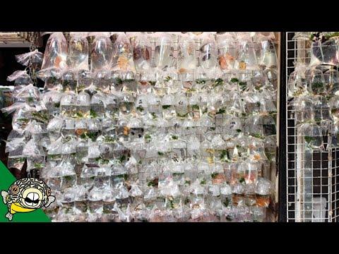 Hong Kong Aquarium Fish Street Market