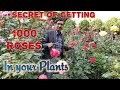Secret of Getting Thousands of Roses and Date Schedule of doing all Process.