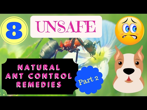 (Part 2) 8 Unsafe Natural Ant Control Remedies (for Dogs)