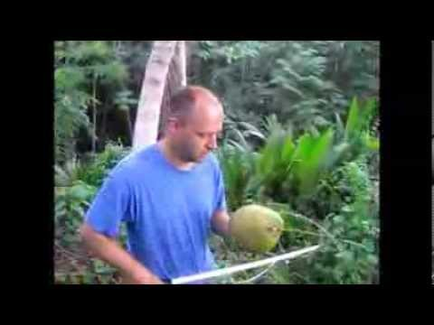 How to Cut Down a Coconut