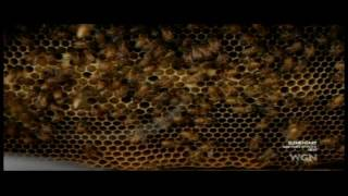 """Elementary Sherlock  and Watson-S1E24-""""You Named A Bee After Me?"""""""