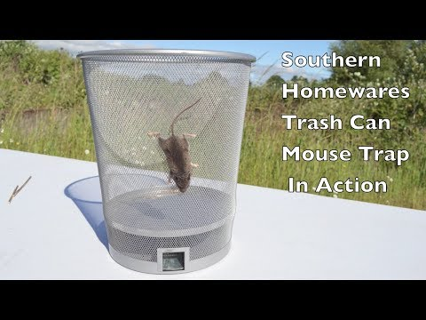 Trash Can Mouse Trap In Action. Southern Homewares Live Catch Mouse Trap In Action