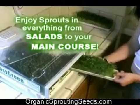Organic Sprouting Seeds + The Easygreen Sprouter = SuperFood