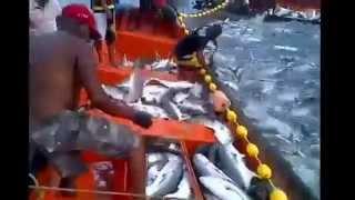 اغرب طريقة لاصطياد كمية هائلة من السمك !! big catch