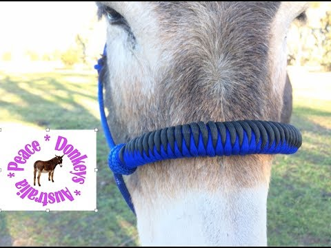 How to make a snake knot noseband for horse halter
