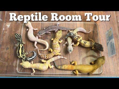 REPTILE ROOM TOUR MARCH 2018 (20 pets!!)