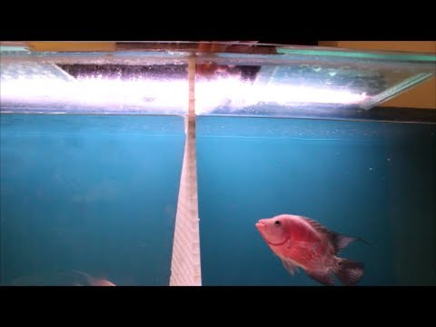 How to Stop Fish from Jumping