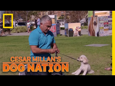 Correcting the Nervous Energy | Cesar Millan's Dog Nation