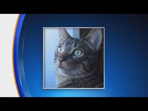 Lost cat reunited with owner after 10 years Lost cat reunited with owner after 10 years
