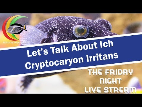 Let's Talk About Ich ( Cryptocaryon Irritans )