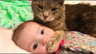Funny Cats - Baby vs Cats Fun | LIFE FUNNY PETS 🐯🐶
