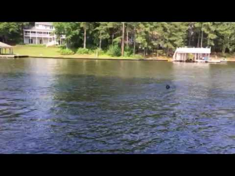 DIY dog ramp for the lake dock or sea wall