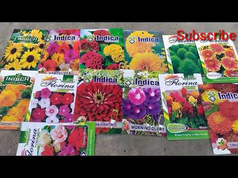 Where to buy Flower/Vegetables seed  Online/Offline at cheapest rate Best Quality   