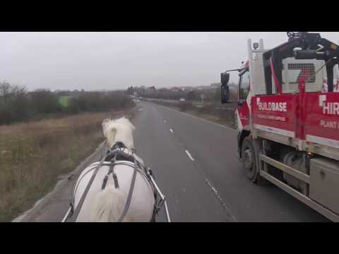 Driving in town traffic - Silver the cob