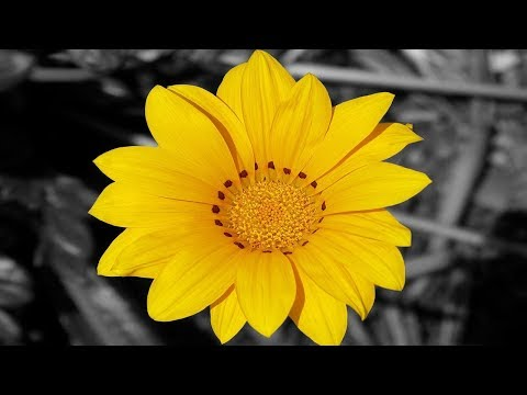 How to Make Background Black and White in Photoshop CS6||Color Splash Effect