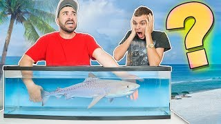 Whats in the Box CHALLENGE (UNDERWATER VERSION) LION FISH AND SHARKS!