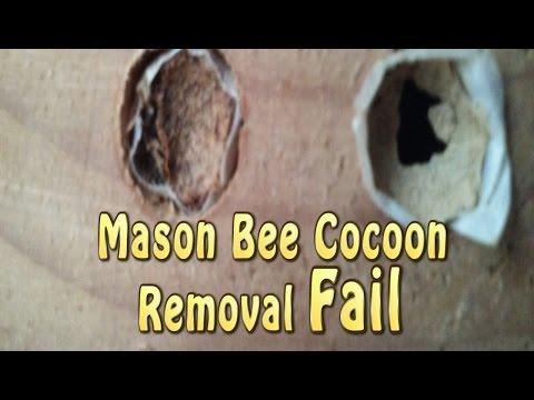 Mason Cocoon Removal FAIL