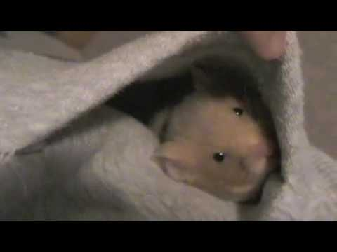 The Life of a Hamster