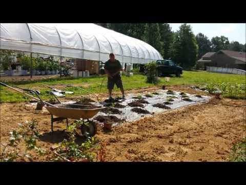 Growimg Melons In Horse Manure