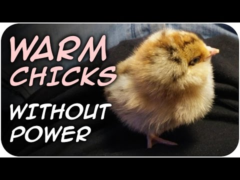 Keep Chicks Warm WITHOUT POWER (57)