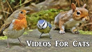 Videos for Cats to Watch : Forest Birds Extravaganza