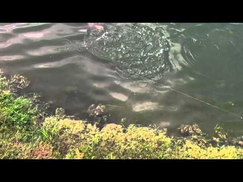 Pond Bass And BlueGill Fishing