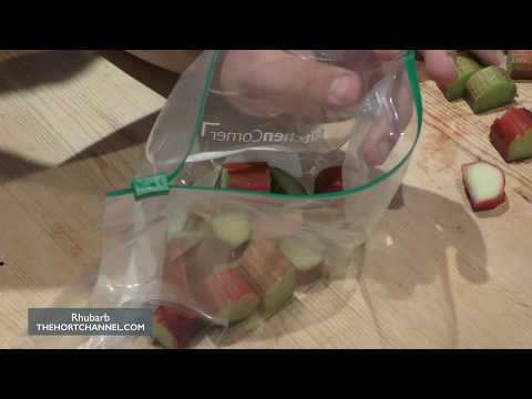 How to Store / Freeze Rhubarb   Kitchen