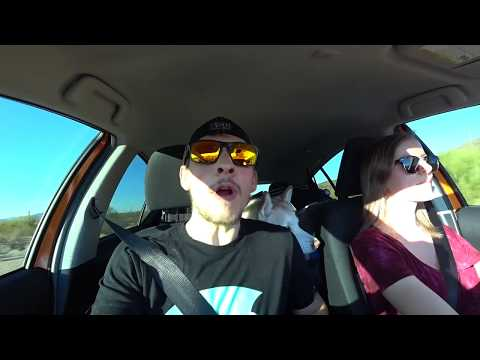 #3 Crossing the Mexican Border and Driving to Mexico With a Dog
