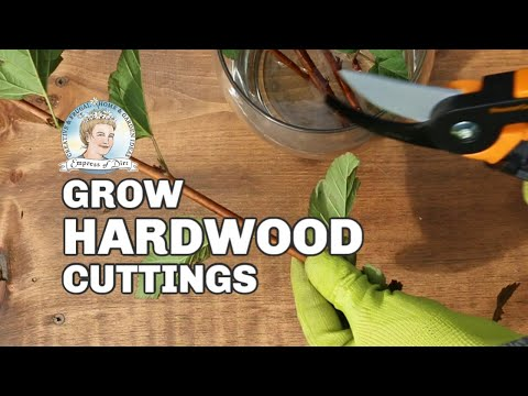 How to Root Hardwood Cuttings | Fall Propagation Tips