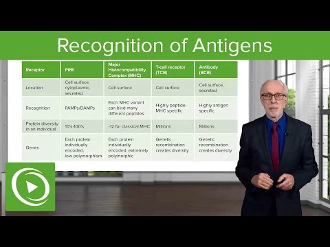 Recognition of Antigens: Receptors & Antibodies – Lymphocyte Development | Lecturio