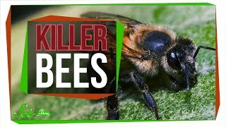 Download Killer Bees: The Real Zom-bee Apocalypse Video