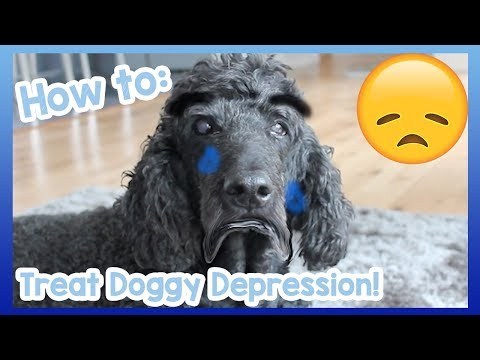 How to Treat Depression in Dogs! Tips and Advice on How to Help Your Depressed Dog Overcome it! 😞🐶