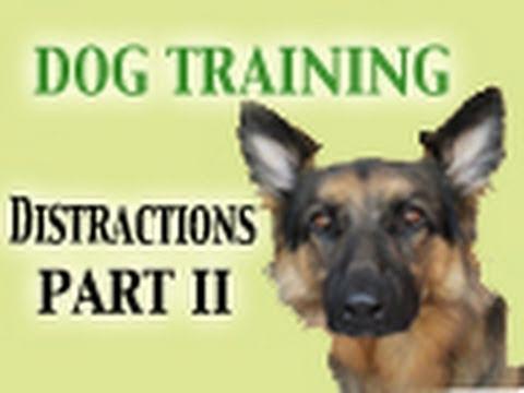 Dog Training Tutorial - Distractions PART II (Healing Reactivity)
