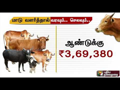 Is growing a cow profitable - What do numbers say?