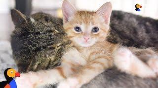 Grumpy Street Cat LOVES Being A Grandpa To Foster Kittens - GRANDPA MASON | The Dodo