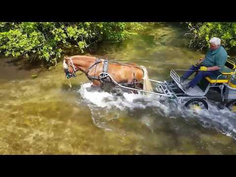 Training a driving pony - Welsh Sec C gelding, Trevor