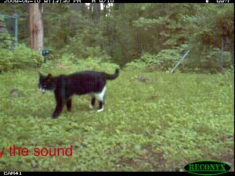 Test of ultrasonic cat repellent