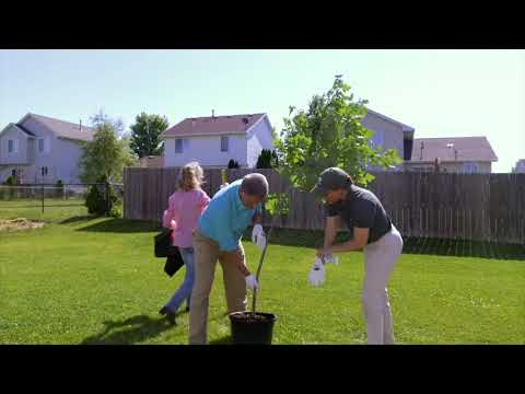 Properly planting a tree
