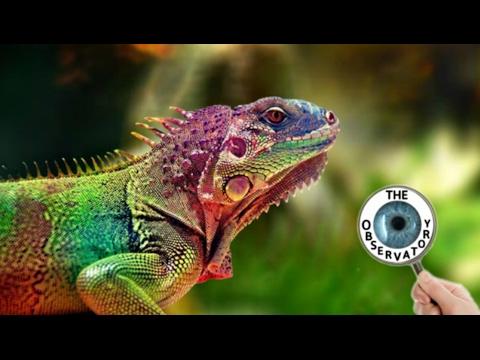 5 Of The Amazon Rainforest's Most Bizarre Animals!