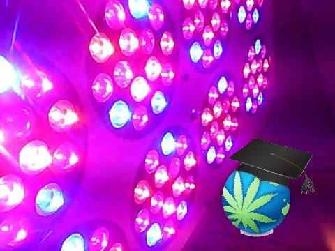LED Grow Light Basics - Choosing A Light Guide