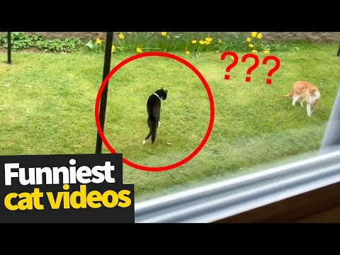 Xxx Mp4 Hilarious Cat Viral Videos Ultimate Cat Compilation 2019 3gp Sex