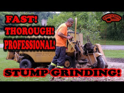 Stump Grinding To Create The Ultimate Deer And Animal Magnetism