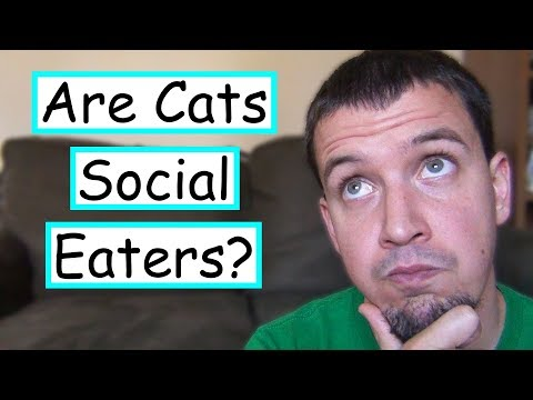 Do Cats Have Dinner Parties?