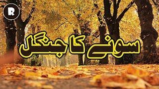 Sone ka Jungle   Ek Islami Waqia   Religion.PK